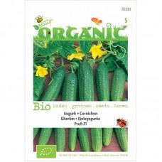 Buzzy® Organic Augurk Profi F1 (BIO)